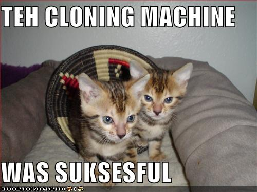 KittyCloning