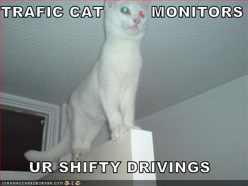 TRAFIC CAT MONITORS