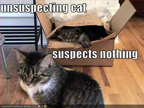 unsuspecting cat suspects nothing2