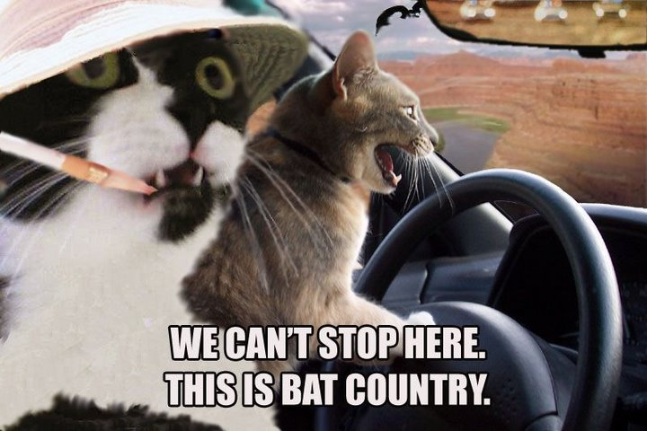 WE CAN'T STOP HERE. THIS IS BAT COUNTRY