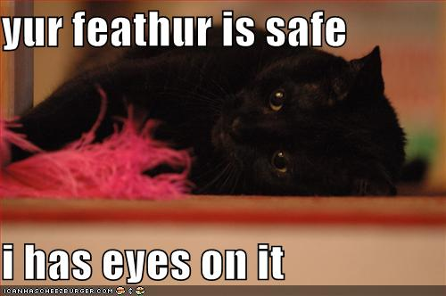 yur feathur is safe i has eyes on it