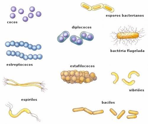 Resultado de imagen de bacterias