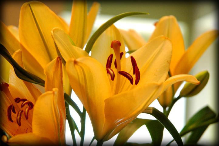 [flowers._LRjpg]