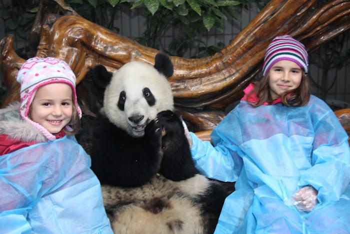 Pandas em Chengdu!