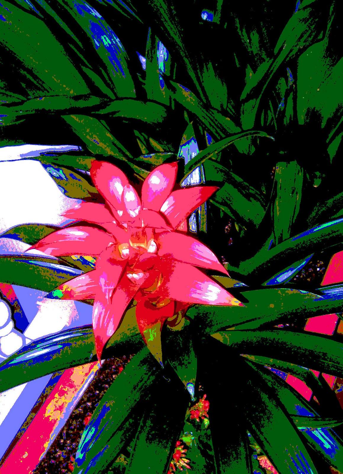 http://4.bp.blogspot.com/_5RAHn64AgY4/TSHzqJ2li8I/AAAAAAAADzo/tFsPfVORYyo/s1600/posterizedredflowerwithfiltersaturated.jpg