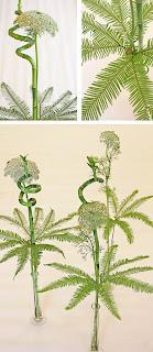 ammimajus, umbrella fern, bambuspiral