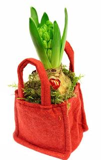 vit hyacint, filtpåse