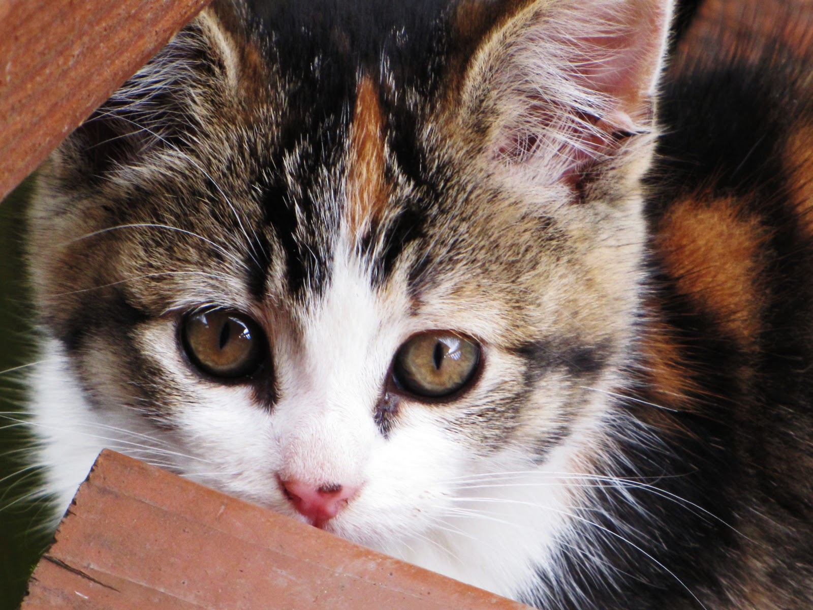 Koch Family News My little kitten