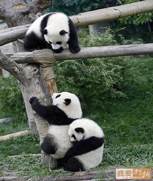 [panda+lift.bmp]