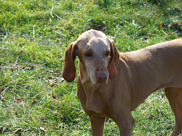 """Buchta""                                                       January 10, 1999 - November 12, 2008"