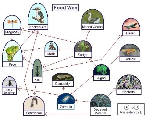 Jertimarsie Tundra Food Web
