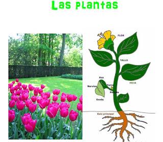 Que son las plantas c e i p quot serracines quot quot las for Que son la plantas ornamentales