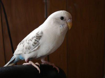 Sydney the bird