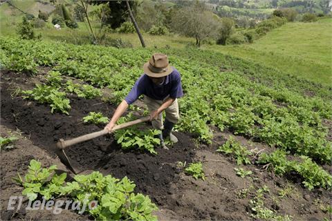 Gastronom a mayo 2011 for Que es la asociacion de cultivos