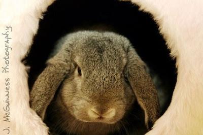 Christmas raffle for Rabbit & Guinea Pig Welfare. CLOSED Il_430xN.138247131