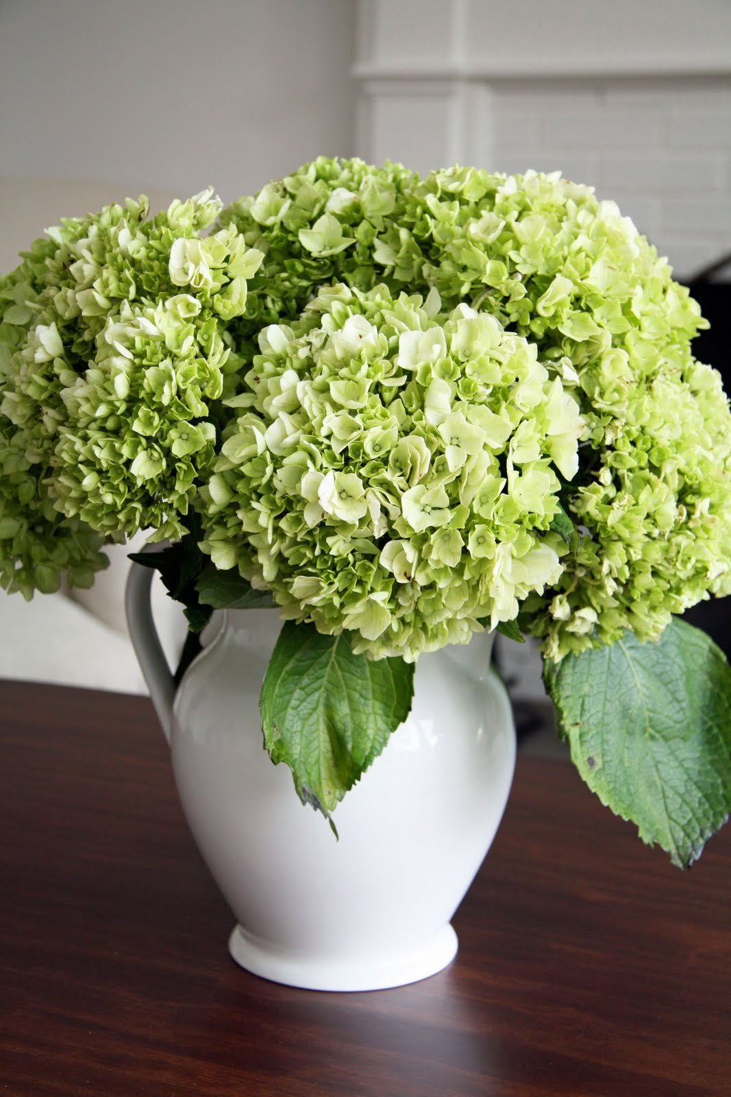 In the fields hydrangea for Flowers for dining room table