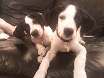 Daisy & Duke