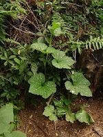 Hugelkultur composting