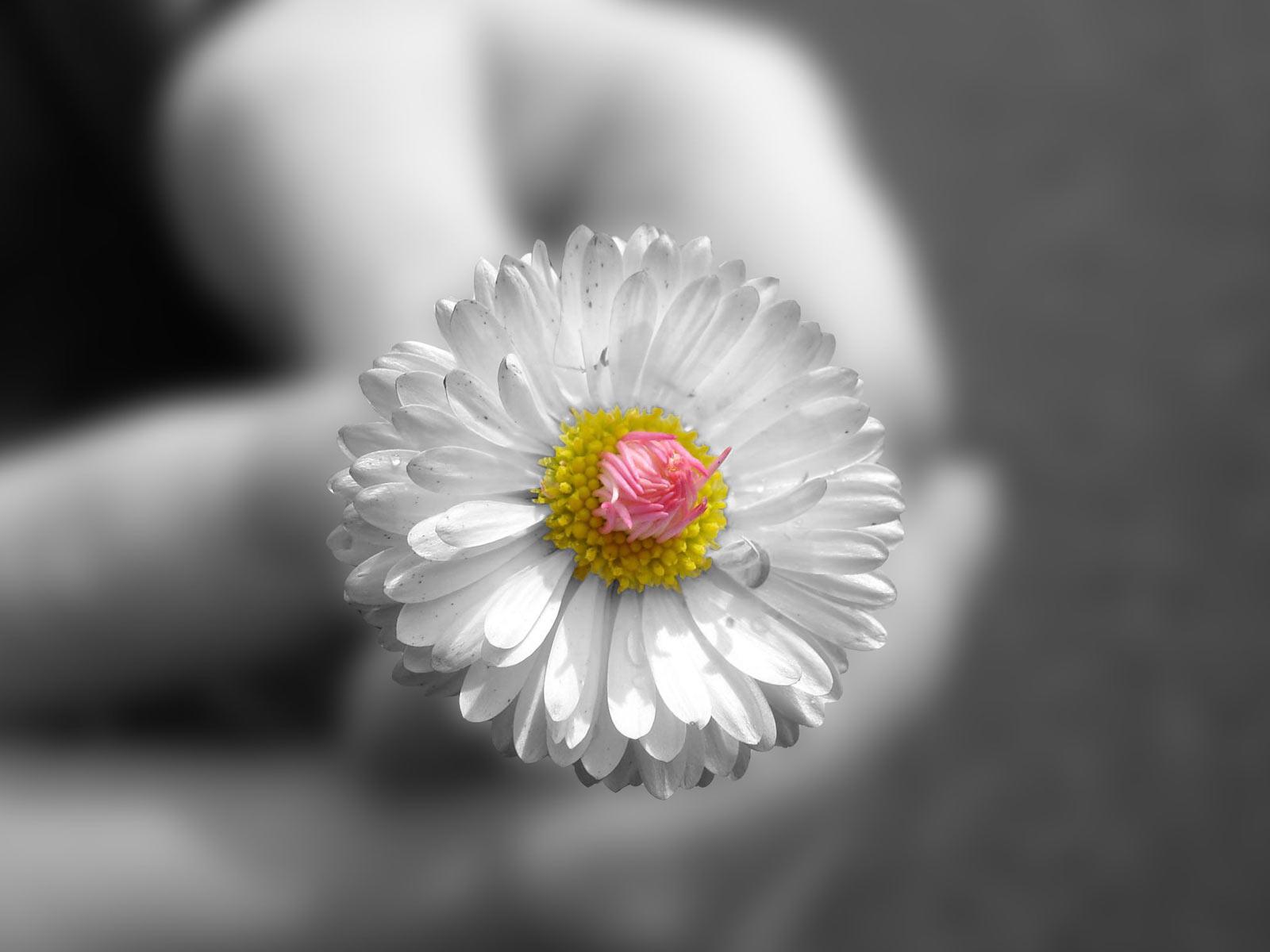 http://4.bp.blogspot.com/_5ZP5VnVQE-o/THLIhK0vK8I/AAAAAAAAAC8/L2Yierkt8Kw/s1600/+Desktop+Wallpaper+%C2%B7+Gallery+%C2%B7+Nature++Summer+Flower.jpg