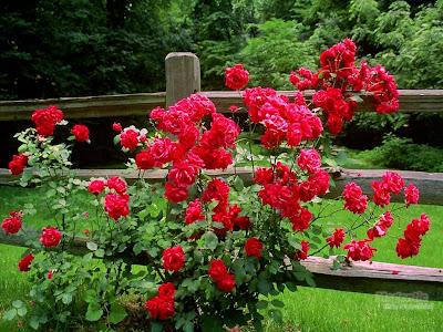 http://4.bp.blogspot.com/_5ZTva8nQduw/SOZYCJRjANI/AAAAAAAAJcE/l-qm_LmeNzs/s400/jardim+roseiras.JPG