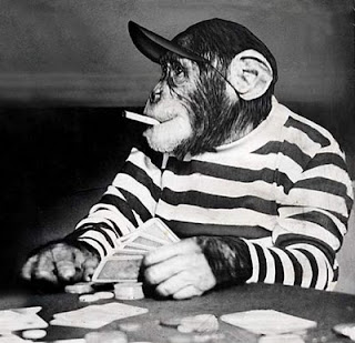 gambar monyet merokok - gambar monyet
