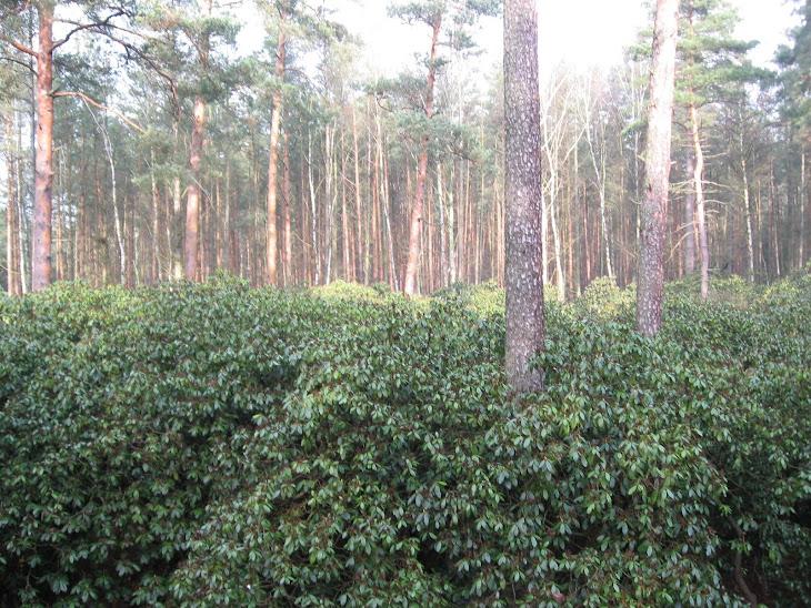 Typowy polski las zimą.