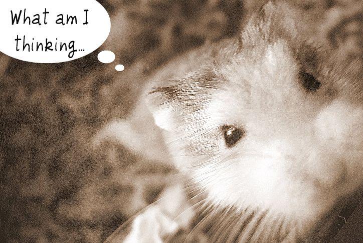 (o_O; ~!? bloggie bloggie bloggie bloggie bloggie bloggie bloggie golfy