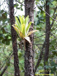 bosque de pino y otras plantas interesantes