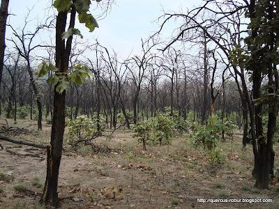El bosque recuperándose de un incendio