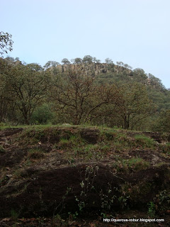 Faldas del Cerro el Chicharrón