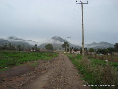 Brecha en el Taray al Cerro San Francisco