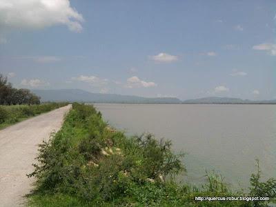 Brecha bordeando laguna de Magdalena
