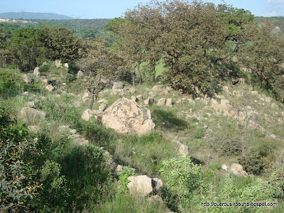 Alrededores de el geocache Magics Rocks of Tala