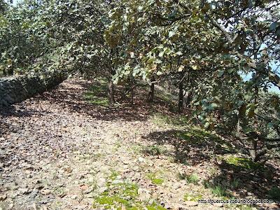 Bosque de encinos (quercus sp) a 1900 msnm