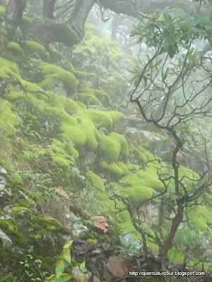 Paisaje en el Cerro Grande de Ameca
