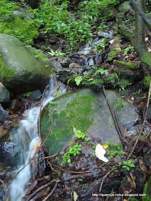 Agua fresca en el Cerro Grande de Ameca