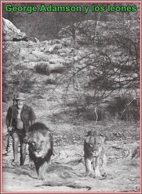 george adamson y los leones
