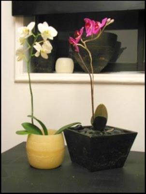 orquideas en macetas