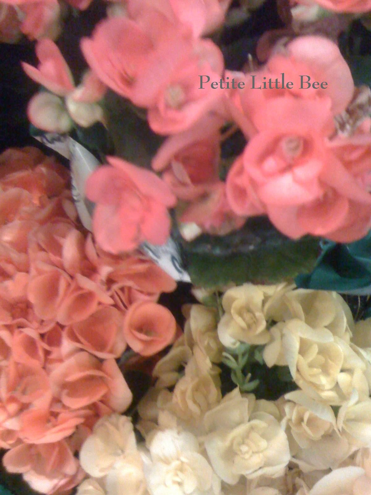 [flowers+7]