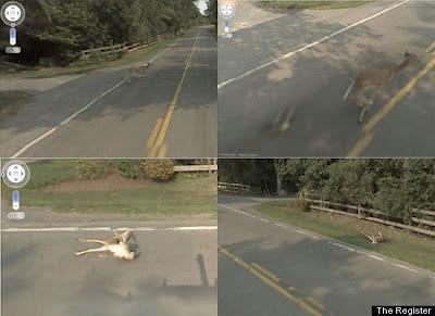 Google Mato a Bambi