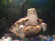 Ninja Our Turtle