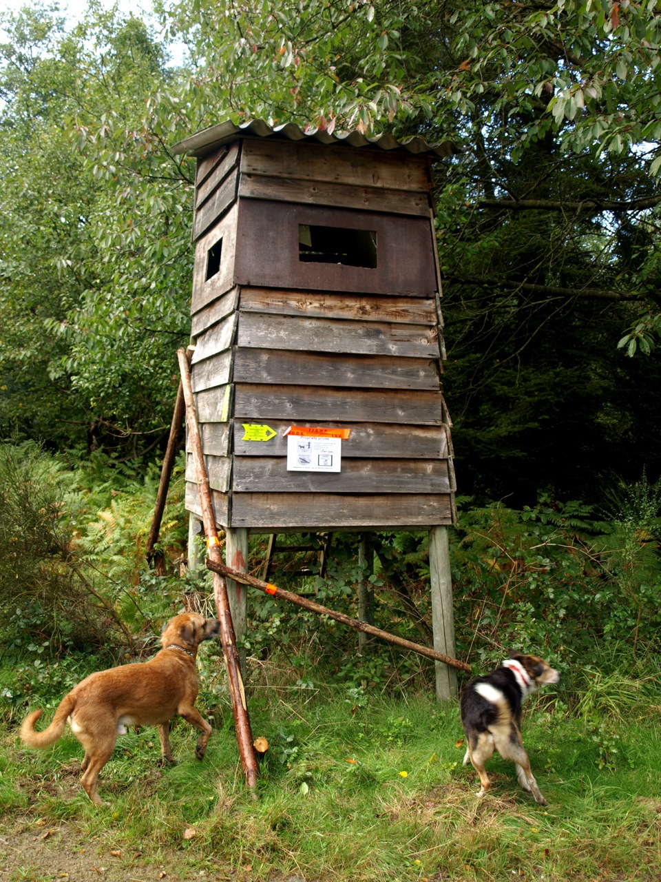 Home Made Deer Shooting Houses submited images
