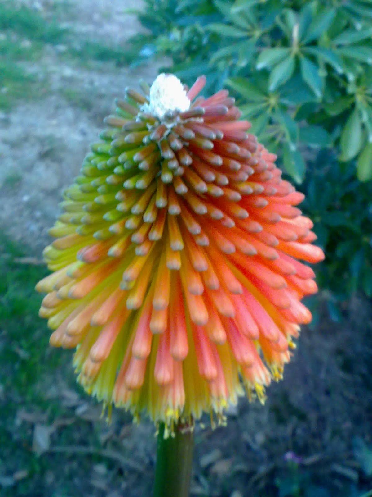 Fotos de flores raras y bonitas for Plantas bonitas de interior
