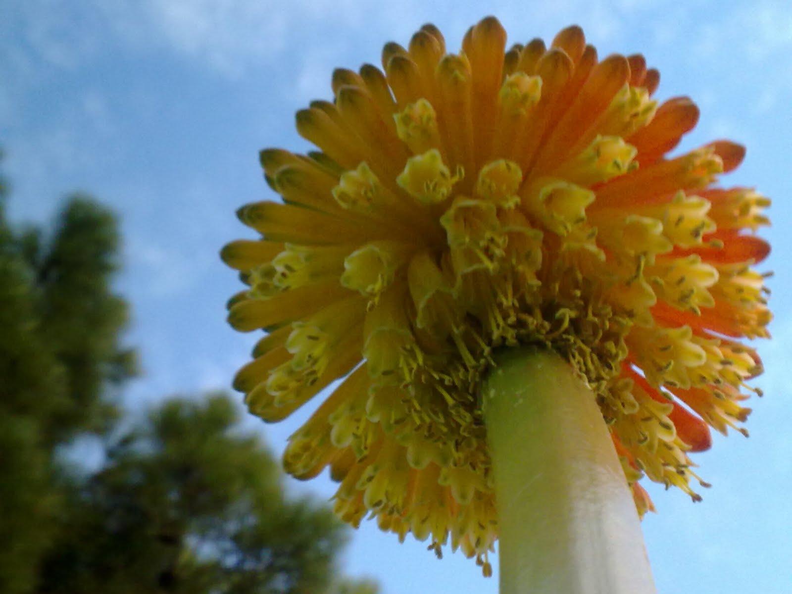 fotos de flores raras y bonitas - fotos de flores impresionantes Imagenes De Flores Bellas
