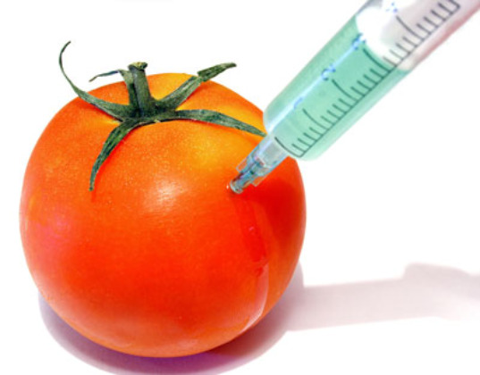 genetically modified organisms the european union vs Abstract this article analyzes the reasons why in 2010 the european commission proposed a legislative framework on genetically modified organisms (gmos) that could give some powers back to the member states.