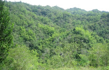 PAQUE NATURAL GUASIMO