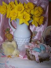 Spring Daffodil's