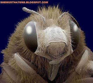 Gambar Ajaib dari Mikroskop Elektron