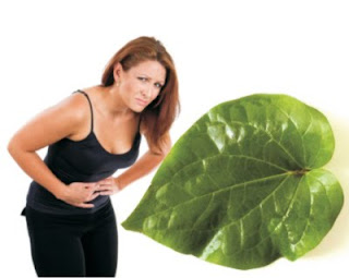 Essential Oil from Piper leaves cure gastritis