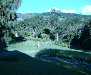 Vista da Agrofloresta